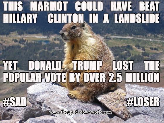 marmot-trump